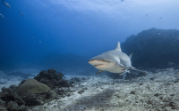 Photo From The Awakening Shark Dive